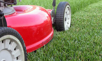 Lawn Care in Milwaukee WI Lawn Care Services in Milwaukee WI Quality Lawn Care in Milwaukee WI