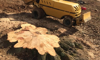 Stump Removal in Milwaukee WI Stump Removal Services in Milwaukee WI Stump Removal Professionals Milwaukee WI Tree Services in Milwaukee WI