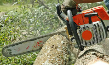 Tree Removal in Milwaukee WI Tree Removal Quotes in Milwaukee WI Tree Removal Estimates in Milwaukee WI Tree Removal Services in Milwaukee WI Tree Removal Professionals in Milwaukee WI Tree Services in Milwaukee WI