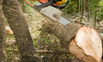 Tree Service in Milwaukee WI Tree Service Estimates in Milwaukee WI Tree Service Quotes in Milwaukee WI Tree Service Professionals in Milwaukee WI