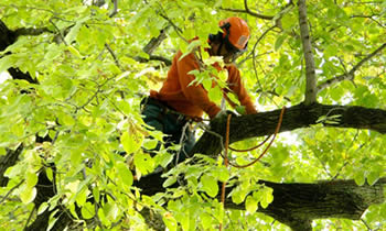 Tree Trimming in Milwaukee WI Tree Trimming Services in Milwaukee WI Tree Trimming Professionals in Milwaukee WI Tree Services in Milwaukee WI Tree Trimming Estimates in Milwaukee WI Tree Trimming Quotes in Milwaukee WI