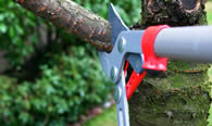 Tree Pruning Services in Milwaukee WI