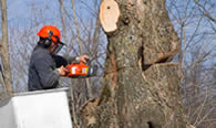 Tree Removal in Milwaukee WI
